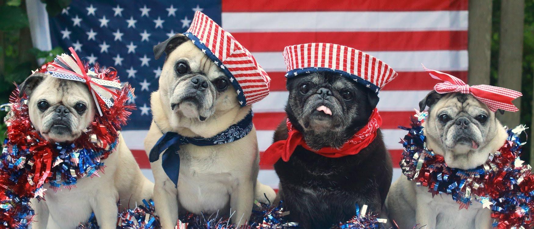 Feel Good Friday: Patriotic Pets – Pet Treater | Let's ...